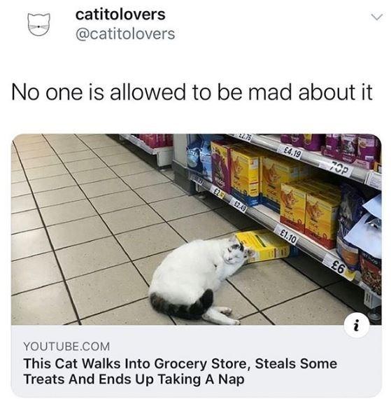 cat memes 2020