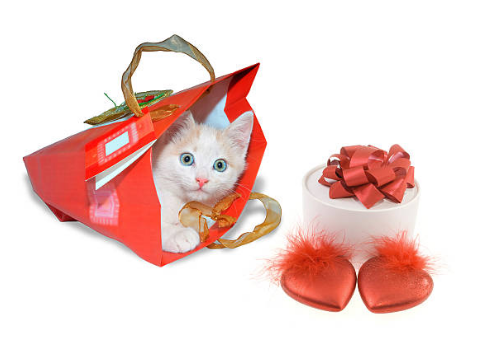 happy valentines day kitten images