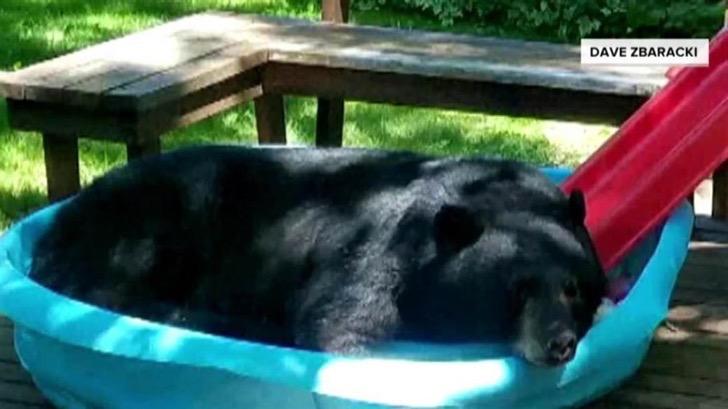 bear in kiddie pool